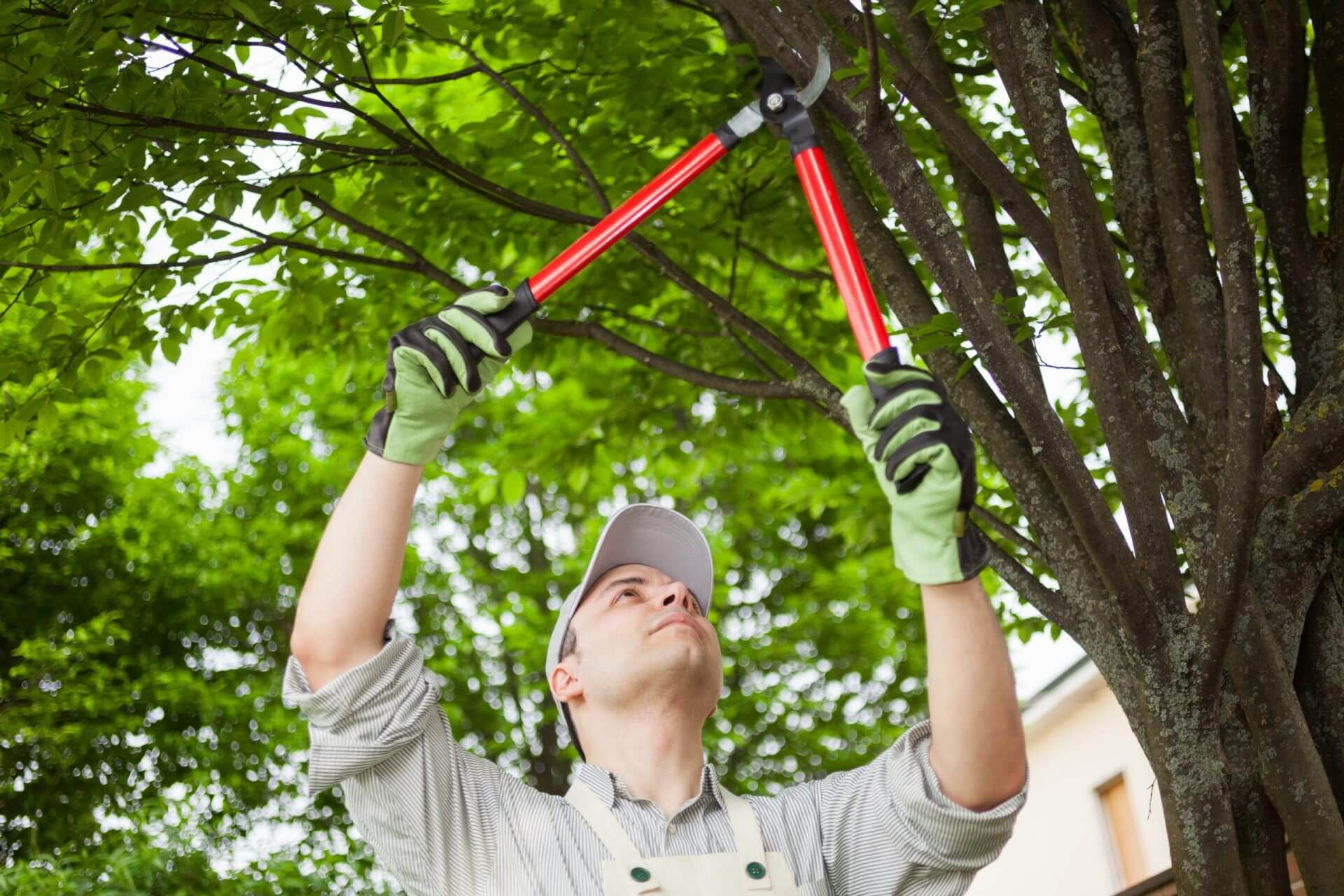 Tree Shrub Pruning